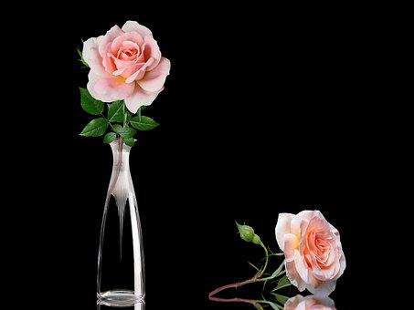 Roses, Vase, Decoration, Flowers, Bloom, Decorative