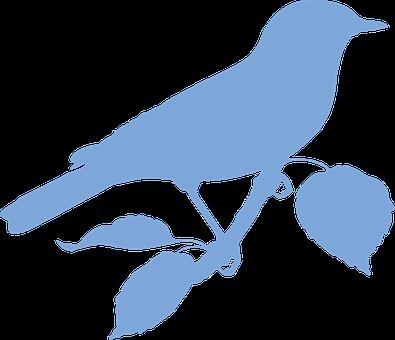 Bird, Animal, Wildlife, Perched, Branch, Silhouette