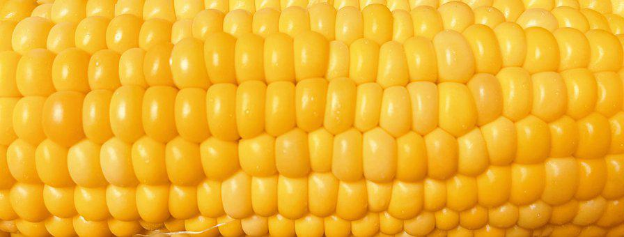 Corn, Corncob, Food, Corn Kernels, Yellow, Cereal Grain