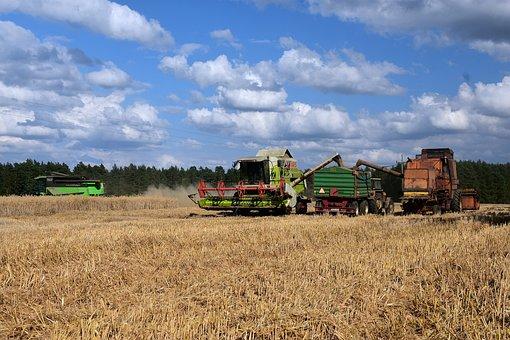 Harvest, Field, Rye, Corn, Farmer, Combine Harvesters