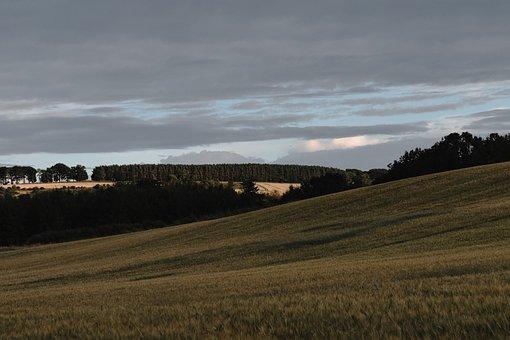 Field, Rolling Hill, Landscape, Rolling Field, Hill