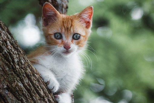 Cat, Kitten, Feline, Mammal, Tamed, Animal, Head