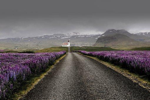 Road, Flowers, Field, Village, Rural, Lupine, Plants