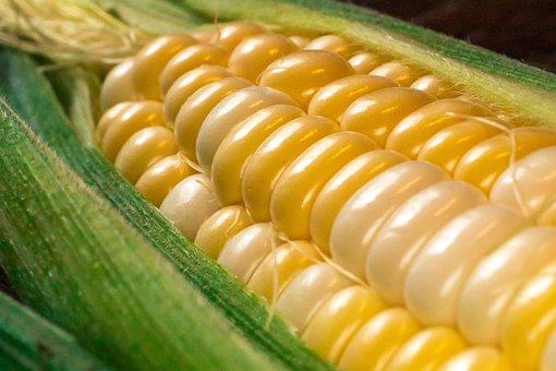 Corn, Vegetables, Grains, Plants, Harvest, Cereals