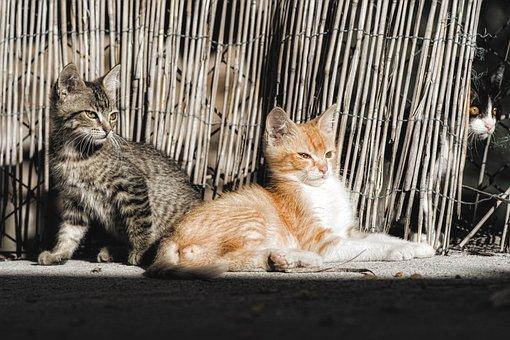 Cats, Kittens, Felines, Mammal, Tamed, Animal, Head