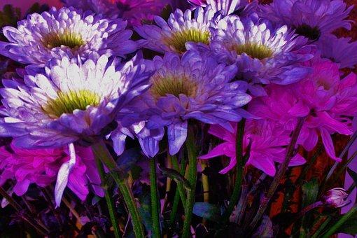 Flowers, Botany, Bloom, Garden, Petals, Plant, Floral