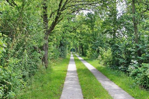 Bike Path, Path, Trees, Landscape, Trail, Cycle Path