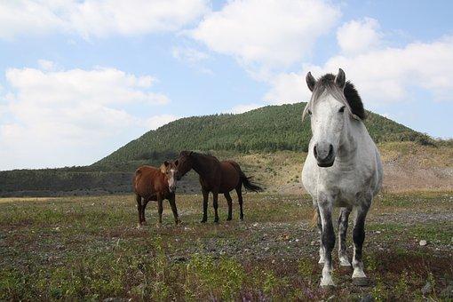 Horse, White Horse, Ascension, Mountain, Peaks