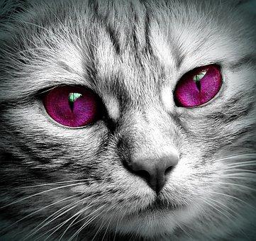 Cat, Face, Tiger, Close, Eyes, Edited, Face Cat, Pet