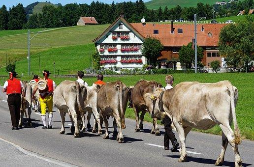 Almabtrieb, Désalpe, Alp Output, Appenzell, Customs