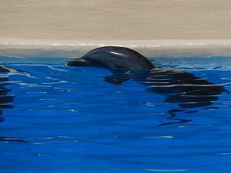 Dolphin, Animal, Rest, Meeresbewohner, Delphinidae