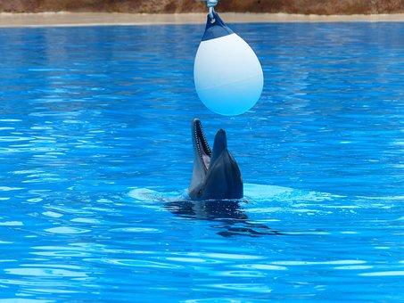 Bottlenose Dolphin, Dolphin, Play, Fun, Funny
