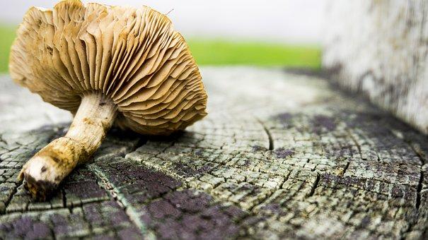 Mushroom, Nature, Natural, Food, Nutrition, Healthy