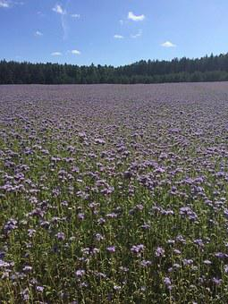Meadow, Flowers, Plants, Spring, Daisies, Nature, Plant