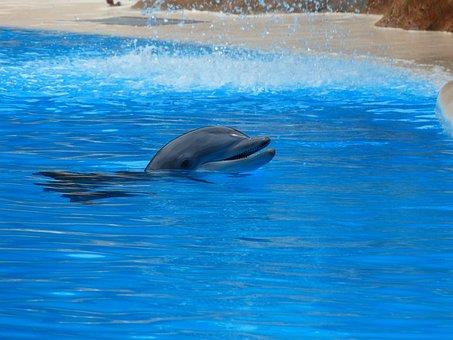 Bottlenose Dolphin, Dolphin, Jump, Tursiops Truncatus