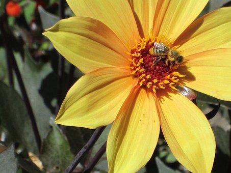 Blossom, Wild Flower, Floral, Summer, Natural, Petal