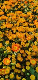 Flowers, Orange Flowers, Garden, Field, Petals