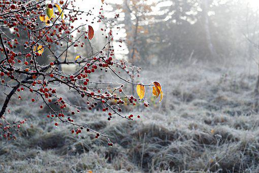 Frost, Nature, Winter, Permafrost, Forest, Weather