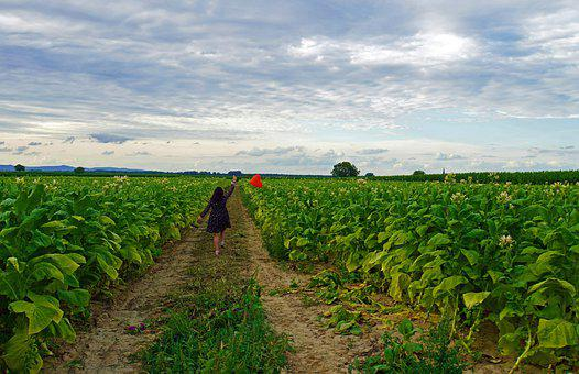 Woman, Dress, Tobacco Field, Ballon, Heart, Pathway