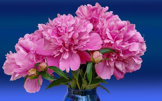 Peonies, Flowers, Flower Vase, Bouquet, Pink Flowers
