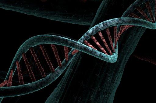 Dna, Biological, Helix, Analysis, Study, Genetic