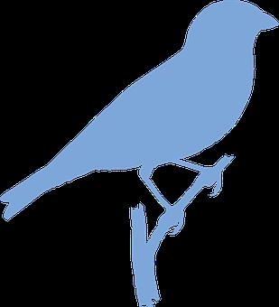 Bird, Animal, Branch, Wildlife, Perched, Silhouette