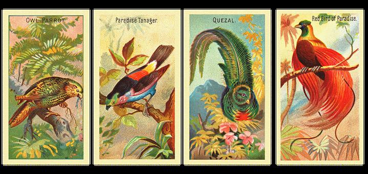 Birds, Avian, Retro, Owl Parrot, Paradise Tanager