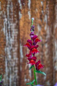 Background, Flower, Nature, Love, Flowers, Petals