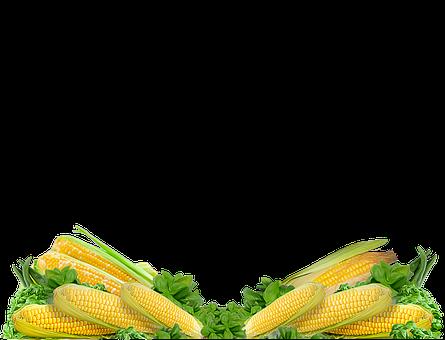 Corn, Vegetable, Sweet Corn, Fresh, Organic, Cob