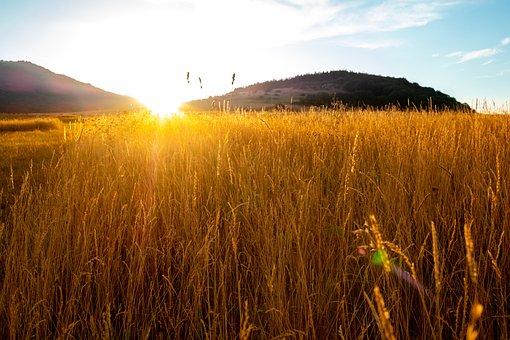 Rye, Field, Outdoors, Sunset, Wheat, Landscape