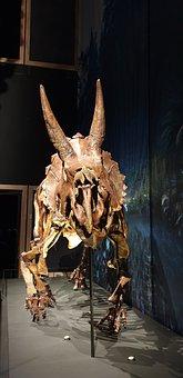 Triceratops, Skeleton, Skull, Bone, Dinosaur, Horns