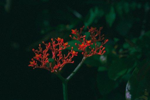 Red, Flowers, Flower Buds, Garden, Bloom, Blossom