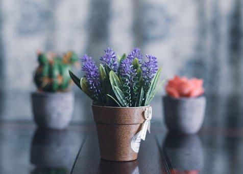 Flowers, Houseplants, Potted Plants, Decoration