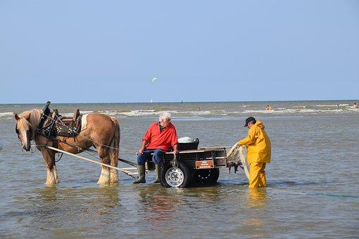 Fishing, Shrimp Fishing, Fishermen, Sea, Beach
