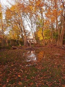 Yard, Sunset, Orange, Trees, Fresno