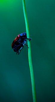 Ladybird, Insect, Beetle, Plant, Bug, Flower, Animal