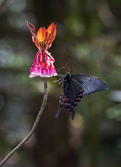 Spangle Butterfly, Butterfly, Flowers