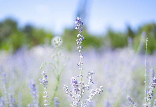 Flowers, Small Flowers, Meadow, Petals, Blue Petals