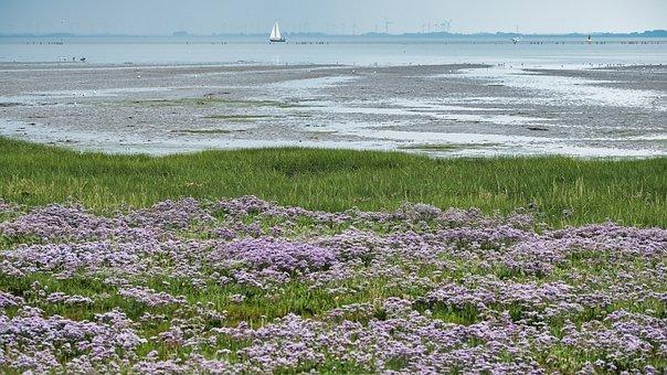 Flowers, Meadow, Port, Sailing Ship, North Sea, Island