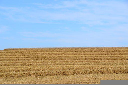 Field, Harvest, Straw, Agriculture, Wheat, Farm, Rural