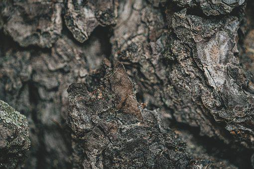 Tree Bark, Branch, Texture, Tree, Nature, Trunk, Rough