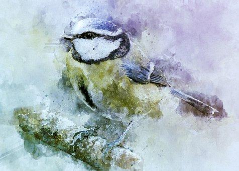 Bird, Blue Tit, Perched, Feathers, Plumage, Beak, Bill