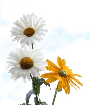 Flowers, Bloom, Botany, Coneflowers, Blossom, Growth