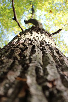 Tree, Bark, Wooden, Texture, Green, Material, Brown