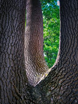 Tree, Bark, Log, Trunk, Forest, Tribe, Texture