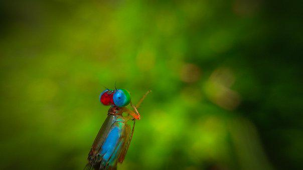 Dragonfly, Insect, Macro, Winged Insect, Odonata