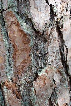 Tree, Bark, Wood, Texture, Log, Trunk, Nature