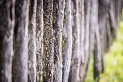 Fence, Wood, Weathered, Barrier, Bark, Logs, Trunks