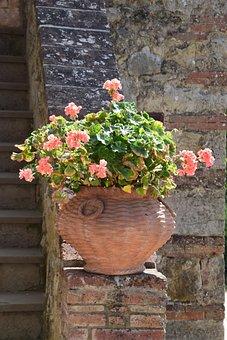 Flowers, Houseplant, Vase, Potted Plant, Amphora, Italy