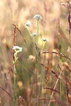 Meadow, Coupling, Wildflowers, Grass, Pasture, Paddock